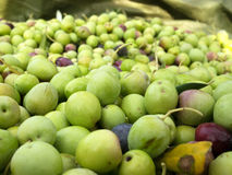 Many green olive on ground Royalty Free Stock Photography