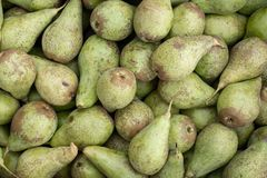 Many green pears after harvest royalty free stock photos