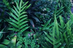 Many green plants or plants in the daytime. For natural backgrounds and wallpapers Stock Images