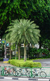 Many green trees planted on street in Singapore Royalty Free Stock Photography