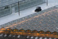 Greenhouses light up the night. Many greenhouses illuminate at night in the winter and a lot of snow around Stock Image