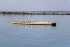 Seagulls on the pier royalty free stock photos
