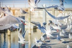 Many gulls on the waterfront Stock Photo
