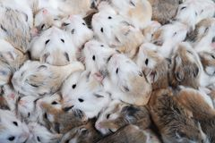 Many hamsters top view Royalty Free Stock Photos