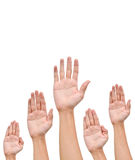 Many Hands raise high up. On white background stock photography