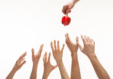 Many hands wanting pepper. Many hands wanting to get pepper royalty free stock images