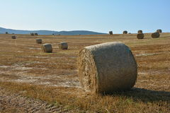 Many hay bales on harvested field. Straw bales on harvested field with many hay bales in horizon and blue sky stock photography