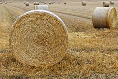 Hay bales in freshly cut large field stock photo