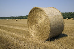 Many haycocks in the field. There are many haycocks in the field Royalty Free Stock Image