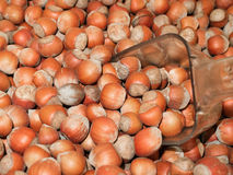 Many hazelnuts. Apply a lot of hazelnuts, brown background royalty free stock photo