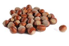 Many hazelnuts Stock Images