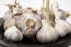 Many heads of garlic on the plate Royalty Free Stock Photography