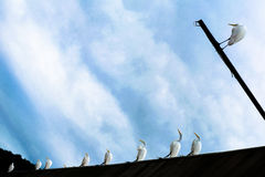 Many herons stood up. Forming a pattern Stock Photos