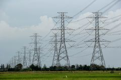 Many of the hight voltage electricity pole stands in a long line on the green rice fields royalty free stock photography