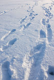 Many human footprints in snow Royalty Free Stock Photos