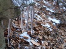 Daggers. Many Icicles on a Ledgen Stock Photo