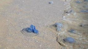 Many jellyfish alive and dead on the Black Sea coast. Ukraine, slow motion stock footage