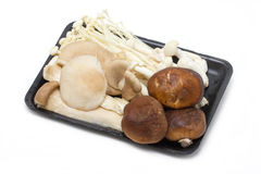 Many Kind Of Mushroom In Container. Royalty Free Stock Photo