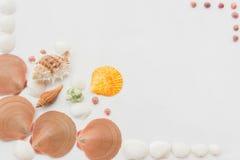 Many kind of shellfishes Stock Photos