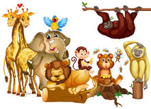 Many kind of wild animals Royalty Free Stock Images