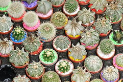 Many kinds of cactus Stock Photos