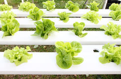 Many kinds of hydroponic system Royalty Free Stock Photography