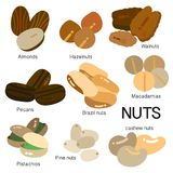 MANY KINDS OF NUTS. Are illustrated in color royalty free illustration