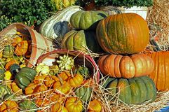 Many kinds of pumpkins and squashes Royalty Free Stock Photography