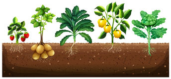 Many kinds of vegetables planting on ground Stock Images
