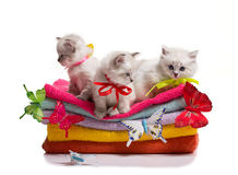 Many kittens and butterflys on towels Stock Images