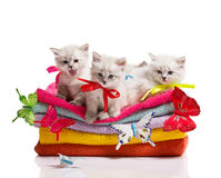 Kittens, towels and butterfly Stock Photography