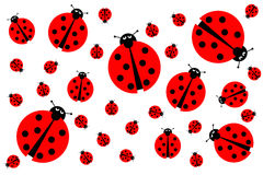 Many Ladybugs Royalty Free Stock Images