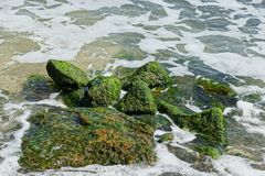 Large green stones in sea water and waves in white foam royalty free stock image
