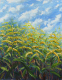 Many large yellow flowers oil painting Stock Photo