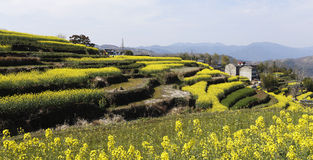 Many layers of terraced fields on the hillside Royalty Free Stock Photography