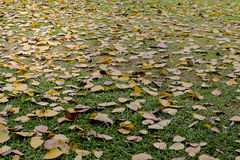 many leaf on floor Royalty Free Stock Photos