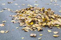 many leaf on floor Royalty Free Stock Photography