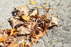 Many leaves. Many beautiful orange leaves at the foot of the mountain Stock Photo