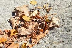 Many leaves Stock Photo