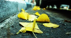 Many leaves on the road- zoom in. Many yellow dry leaves on the road- zoom in on a winter day in Tel- Aviv, Israel Royalty Free Stock Images