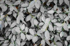 Many leaves that turn gray royalty free stock image