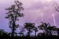 Many lightning strikes during dramatic thunderstorm with rain forest tree silhouettes in foreground, Cameroon, Africa.  Stock Image