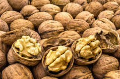 Many lined nuts Royalty Free Stock Photos