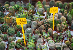 Many, little, different, cute cactus, market in Italy, Reggio Em. Ilia 29/07/2016 10:10:41 Royalty Free Stock Image