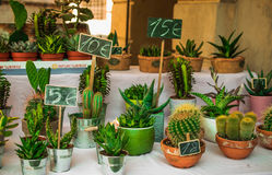 Many, little, different, cute cactus, market in Italy, Reggio Em. Ilia 29/07/2016 10:10:41 Stock Photo