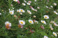 Nature. Flowers are blooming stock photography