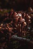 Many little mushrooms on a tree stump Stock Photos