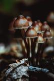 Many little mushrooms on a tree stump close-up Stock Image