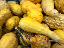 Many little pumpkins Stock Images