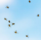 Many little spiderlings fly across the sky. Young spiders Stock Photography